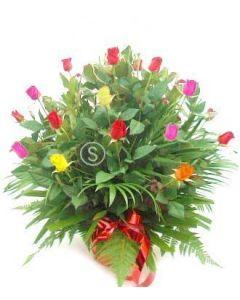 20 Mixed Roses in Pot