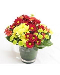 Pretty Daisy Vase