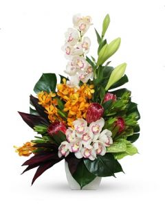 Native and Tropical Arrangement