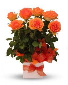Orange Roses Arrangement