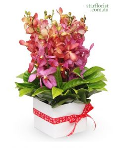 Orchid Box