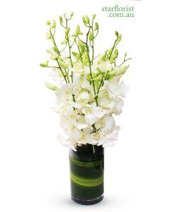 Orchids Fleur