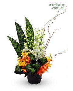 Orchids Pot