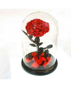 everlasting rose dome