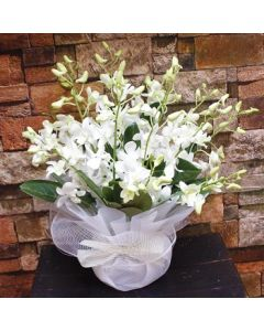 White Orchids Posy