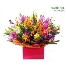Assorted Orchids Arrangement - Large